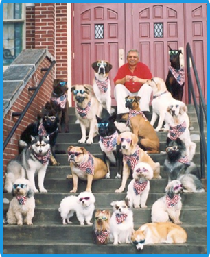 pic of dogs on steps
